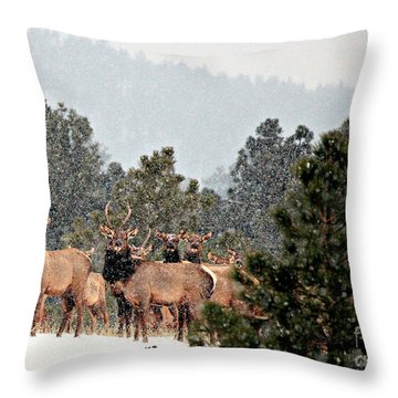 Throw Pillow featuring the photograph Elk In The Snowing Open by Barbara Chichester