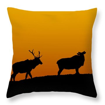 Elk In The Sunset Throw Pillow