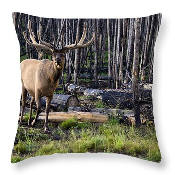 Elk In The Woods Throw Pillow