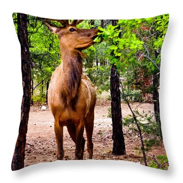 Throw Pillow featuring the photograph Elk - Mather Grand Canyon by Bob and Nadine Johnston