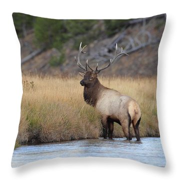 Throw Pillow featuring the photograph Elk On The Madison by Daniel Behm