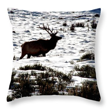 Throw Pillow featuring the photograph Elk Silhouette by Sharon Elliott
