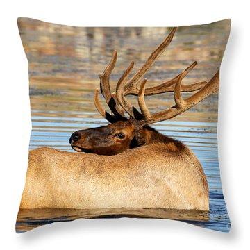 Elk Velveteen  Throw Pillow