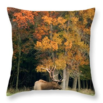 Elk With Autumn Colors Throw Pillow