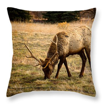 Elkin John Throw Pillow by Jon Burch Photography