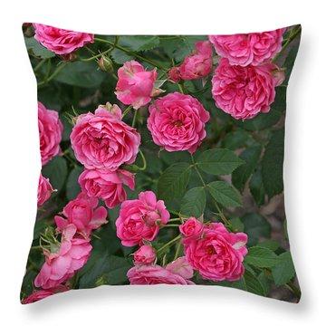 Elmshorn Rose Shrub Throw Pillow