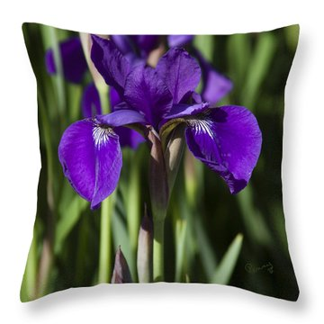 Eloquent Iris Throw Pillow