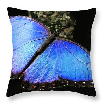 Elusive Blue Throw Pillow by Rosalie Scanlon