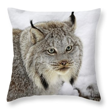 Elusive By Nature Throw Pillow by Inspired Nature Photography Fine Art Photography