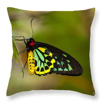 Emerald Beauty Throw Pillow by Mike  Dawson