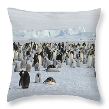 Emperor Penguins Aptenodytes Forsteri Throw Pillow
