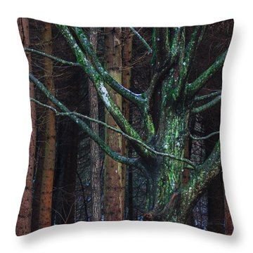 Throw Pillow featuring the photograph Enchanted Forest by Davorin Mance
