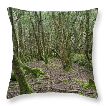 Throw Pillow featuring the photograph Enchanted Forest by Hugh Smith