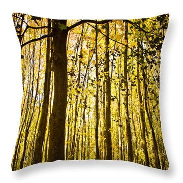 Enchanted Woods Throw Pillow by Sara Frank