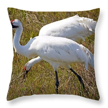 Endangered Beauty - Whooping Cranes  Throw Pillow