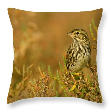 Endangered Beldings Savannah Sparrow - Huntington Beach California Throw Pillow by Ram Vasudev