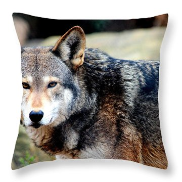 Endangered Red Wolf Throw Pillow