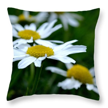 English Daisies Throw Pillow