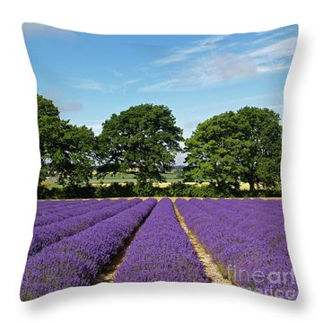 English Lavender Fields Near Selborne Hampshire Throw Pillow by Alex Cassels