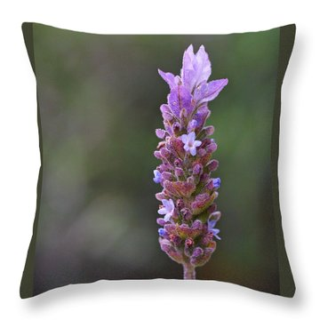 English Lavender Throw Pillow by Rona Black