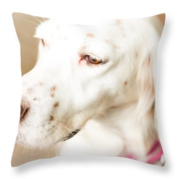 English Setter In Natural Light Throw Pillow by Brian Caldwell