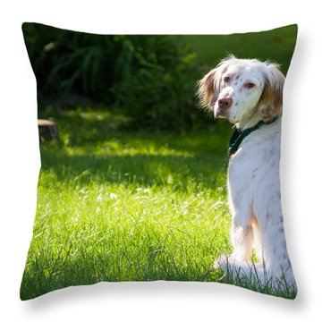 English Setter In The Grass Throw Pillow by Brian Caldwell