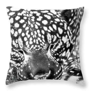 Entering The Dream Realm Throw Pillow