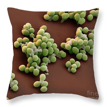 Enterococci Sem Throw Pillow by Eye of Science