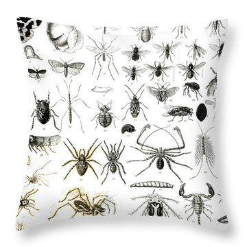 Entomology Myriapoda And Arachnida  Throw Pillow by English School
