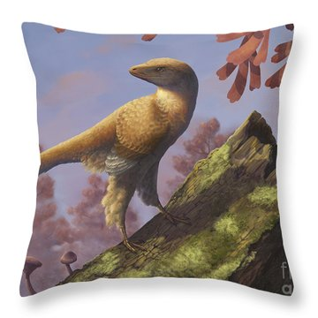 Eosinopteryx Brevipenna Perched Throw Pillow by Emily Willoughby
