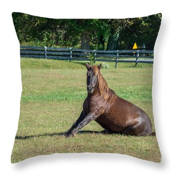 Throw Pillow featuring the photograph Equestrian Beauty by Charles Kraus