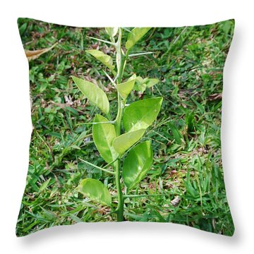 Espina Throw Pillow
