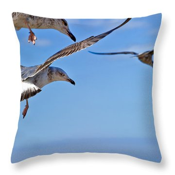 Essaouira Seagull Throw Pillow