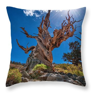 Eternity - Dramatic View Of The Ancient Bristlecone Pine Tree With Sun Burst. Throw Pillow
