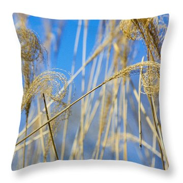 Eulalia Grass Native To East Asia Throw Pillow by Anonymous