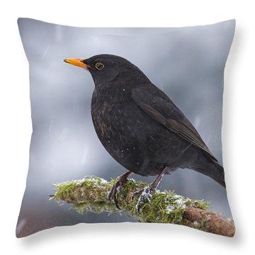 Eurasian Blackbird And Snowfall Germany Throw Pillow