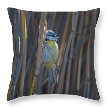Eurasian Blue Tit - Parus Caeruleus Throw Pillow