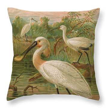 Eurasian Spoonbill Throw Pillow by Dreyer Wildlife Print Collections