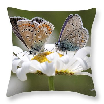 European Common Blue Butterflies Throw Pillow