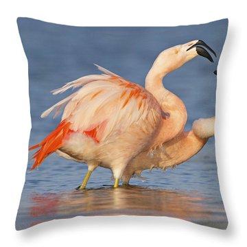 European Flamingo Pair Courting Throw Pillow