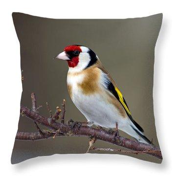 European Goldfinch  Throw Pillow by Torbjorn Swenelius