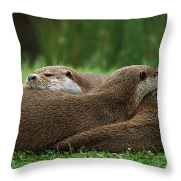 European River Otter Lutra Lutra Throw Pillow by Ingo Arndt
