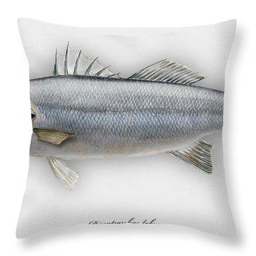 European Seabass Dicentrarchus Labrax - Bar Commun - Loup De Mer - Lubina - Havabor - Seafood Art Throw Pillow