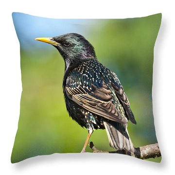 European Starling In A Tree Throw Pillow