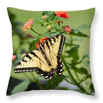 Evening Beauty Throw Pillow by Debbie Green