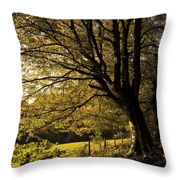 Evening Beech Throw Pillow by Anne Gilbert
