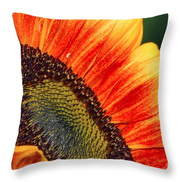 Evening Sun Sunflower Throw Pillow
