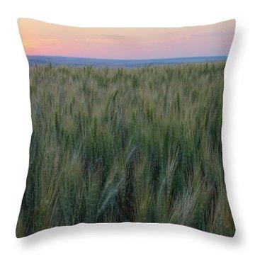 Evening Wheat Throw Pillow