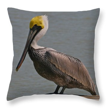 Everglades Brown Pelican Throw Pillow
