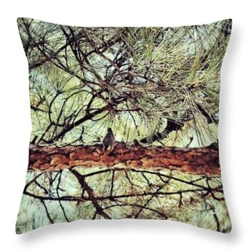 Throw Pillow featuring the photograph Evergreen Bird by Tara Potts